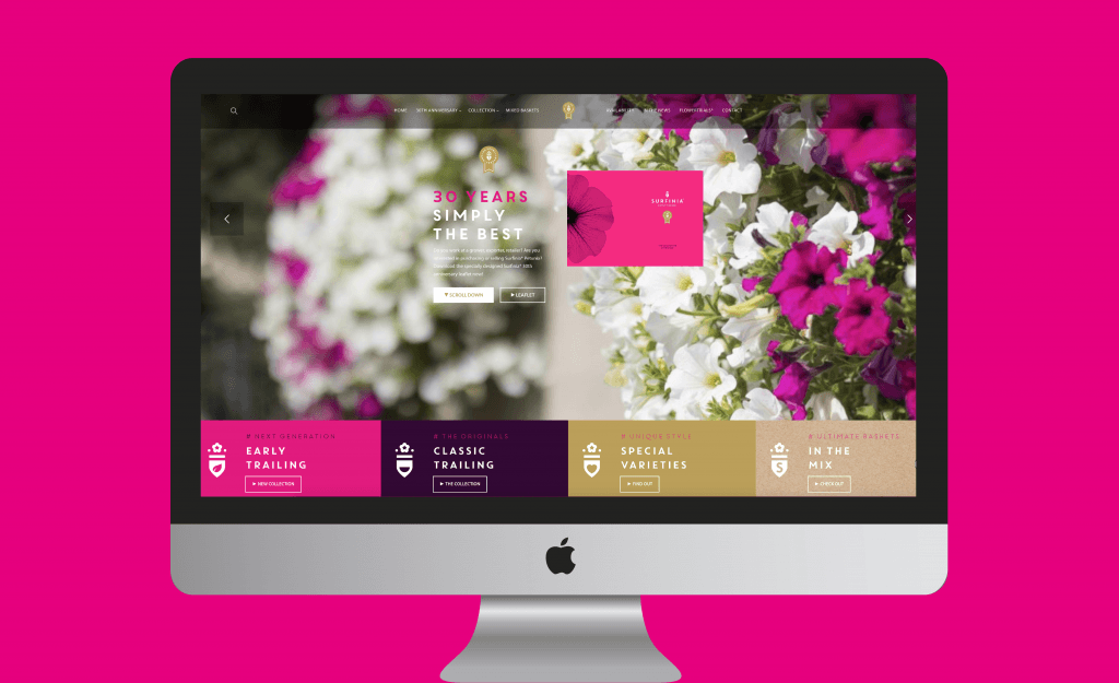 Surfinia® | website | Surfinia® was the first trailing (hanging) Petunia brand on the market.
