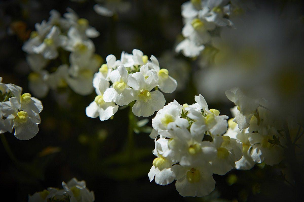 Sunpeddle® White | MNP / Suntory
