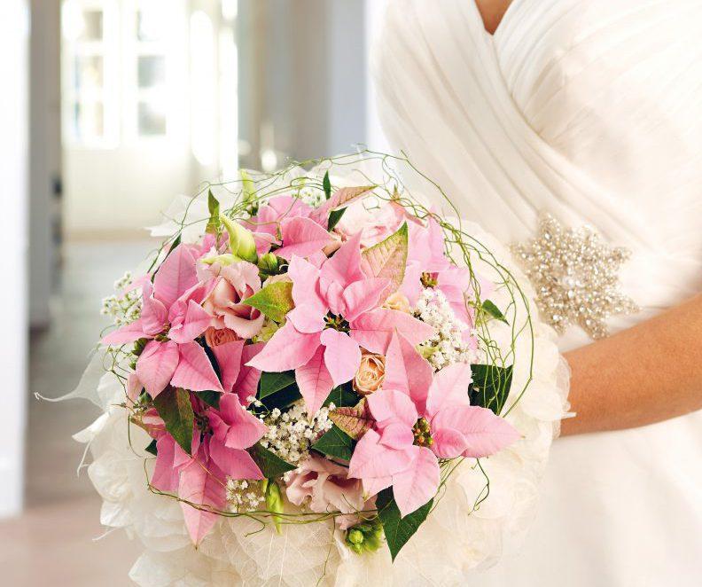 Princettia Pink® | MNP / Suntory