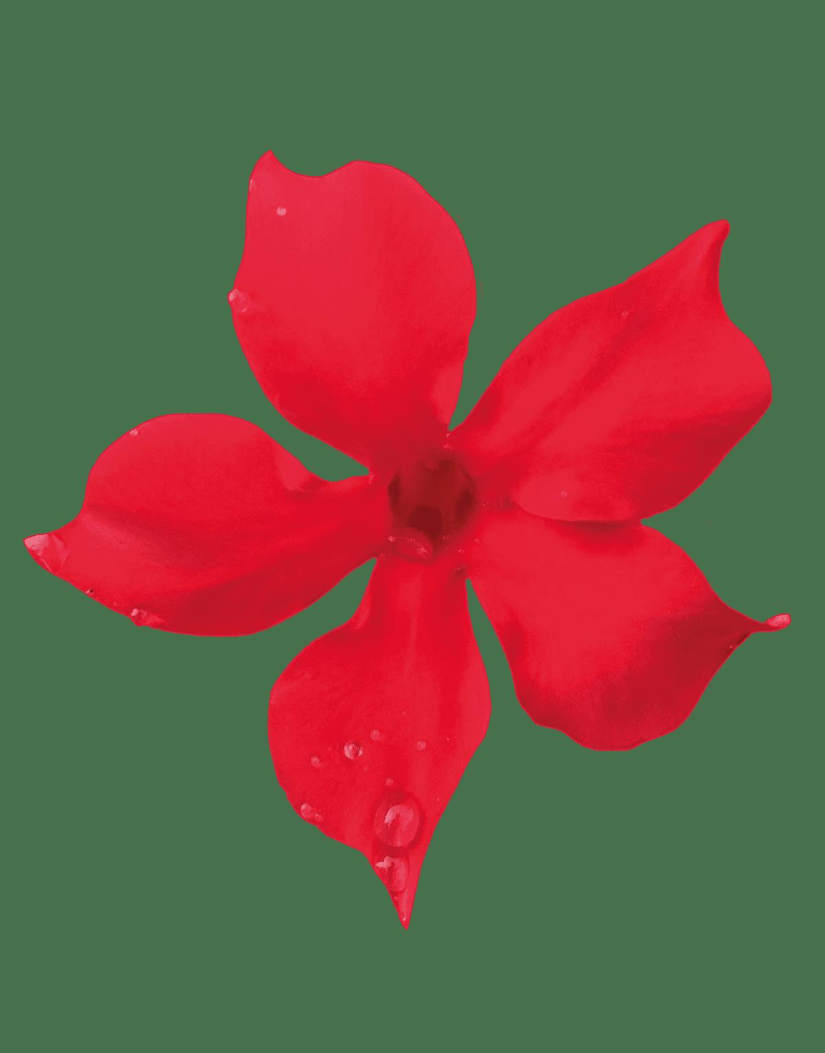 Sundaville Mini Scarlet